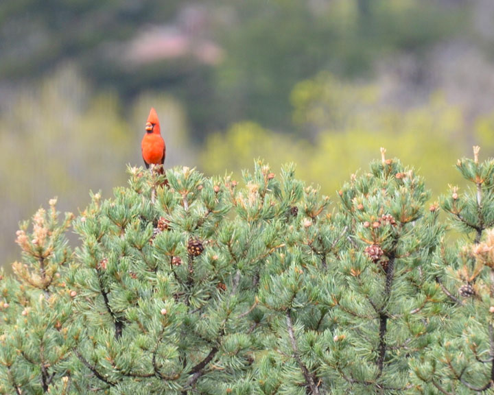 sedona-bird-watching-tour-11
