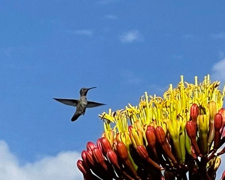 sedona-bird-watching-tour-12
