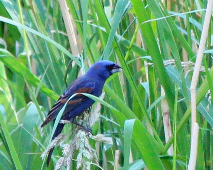 sedona-bird-watching-tour-14