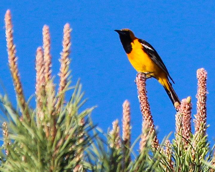 sedona-bird-watching-tour-15