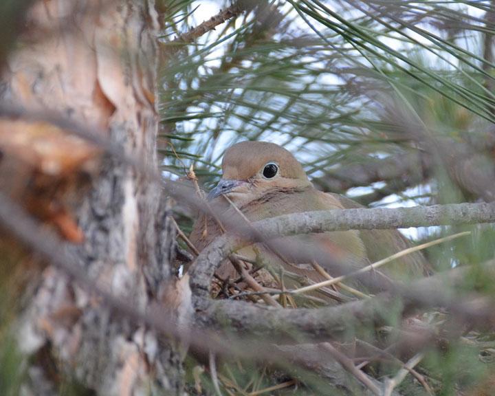 sedona-bird-watching-tour-5