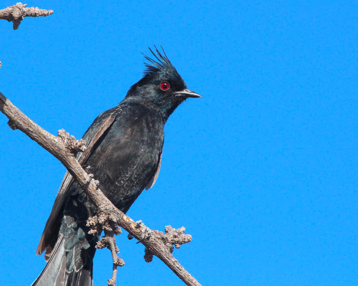 sedona-bird-watching-tour-9